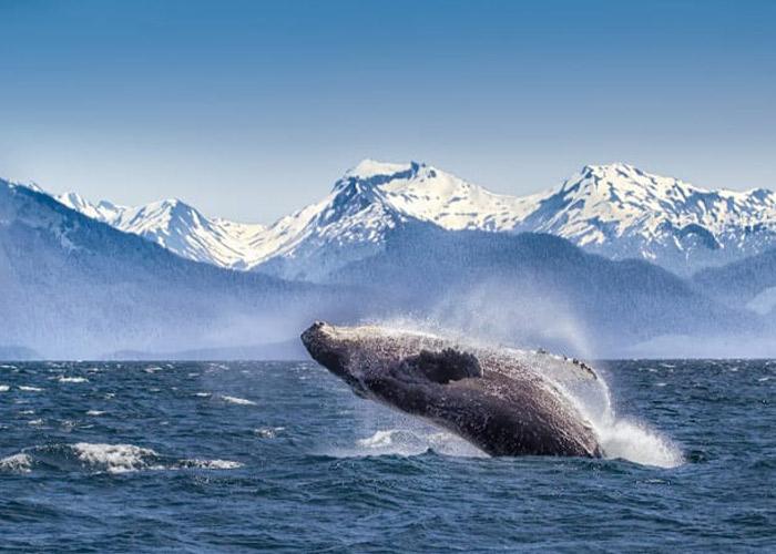 Aug-16-Alaska-index-page-pic
